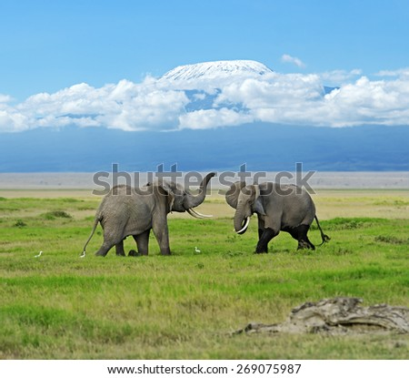 Amboseli National Park in the African savanna - stock photo