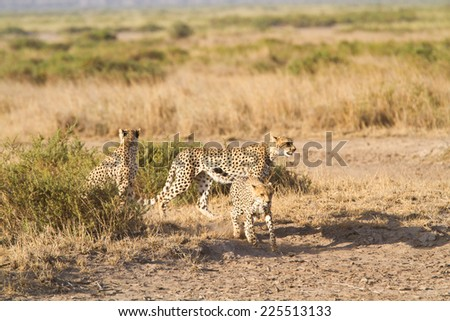 amboseli park - stock photo