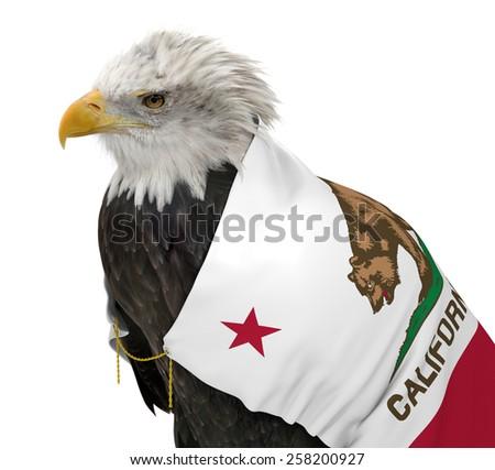 American bald eagle wearing the California state flag - stock photo