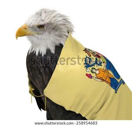 American bald eagle wearing the New Jersey state flag - stock photo