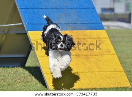 American Cocker Spaniel Jumping off an A-frame at Dog Agility Trial - stock photo