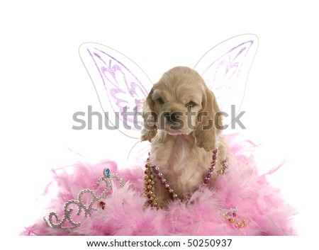 american cocker spaniel puppy dressed up as an angel with pink boa on white background - stock photo