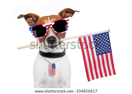 american dog with usa flag - stock photo