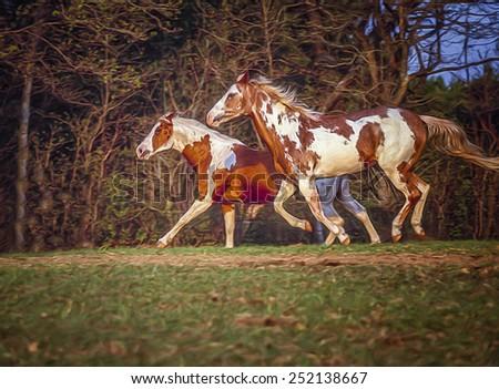 American paint horses running - stock photo