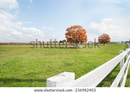 American rural landscape, fall color tree over white wooden fence. - stock photo