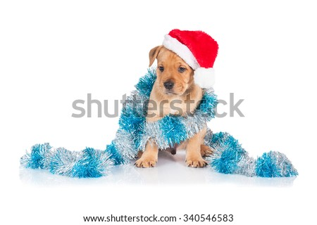 American staffordshire terrier puppy dressed in a santa claus hat with christmas decoration - stock photo