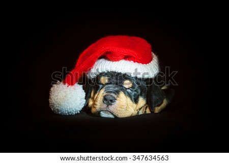 American staffordshire terrier puppy sleeping dressed in a christmas hat on a black background - stock photo