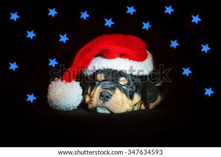 American staffordshire terrier puppy sleeping dressed in a christmas hat with a blue stars around it - stock photo