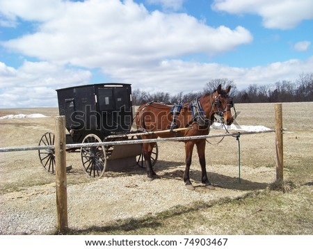 Amish Horse and Buggy - stock photo
