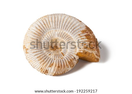 Ammonite onyx stone on white isolated background - stock photo