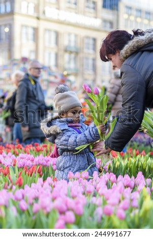 AMSTERDAM, NL - JANUARY 17: Girl hands over tulips on the National Tulip Day in Amsterdam, January 17, 2015. The start of the new tulip season is celebrated with free tulip picking on Dam Square. - stock photo