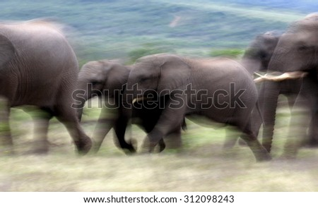 An abstract image of a herd of elephants on the move. A lower shutter used to created motion blur and a feeling of movement. - stock photo