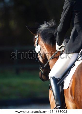 An abstract shot of a horse during a competition. - stock photo