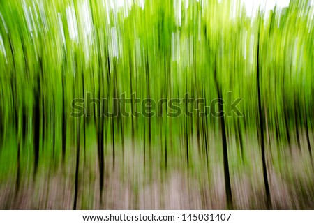 an abstract view of a forest - in motion unsharpness - stock photo