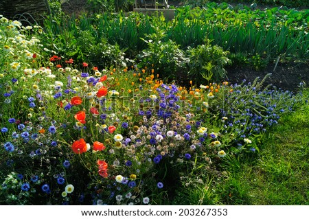 An abundance of wild meadow flowers growing on a community garden allotment. - stock photo