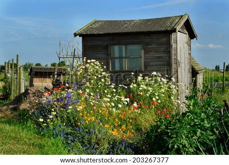 An abundance of wild meadow flowers growing on a community garden allotment in front of wooden gardening shed. - stock photo