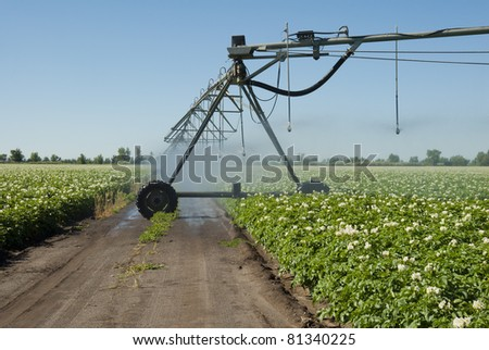 An access road in a potato field irrigated by a pivot sprinkler system. - stock photo