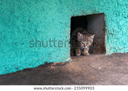An adorable and cute little homeless kitten coming from a hole in a building's cellar.  - stock photo
