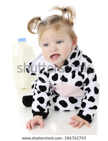 An adorable baby girl in a cow costume, unhappily crawling away in from a half-gallon of milk.  On a white background. - stock photo