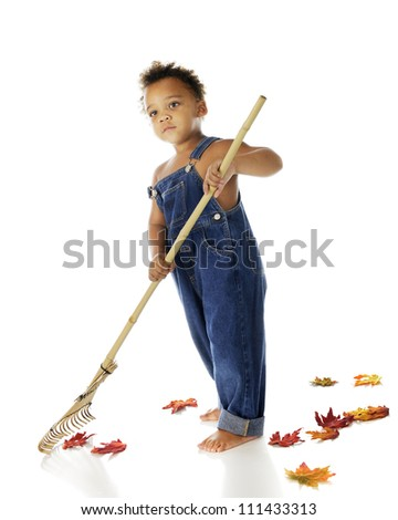 An adorable biracial tot only in overalls, raking up fallen autumn leaves.  On a white background. - stock photo