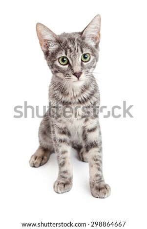 An adorable Domestic Shorthair Four Month Old Kitten Sitting while looking forward.  Beautiful green eyes are stunning. - stock photo
