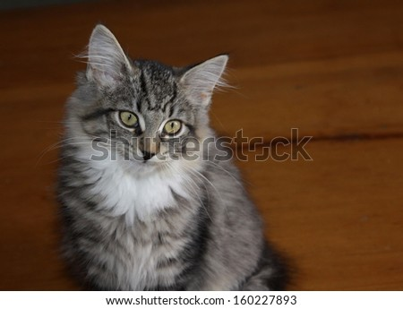 An adorable kitten sitting on a table.  - stock photo