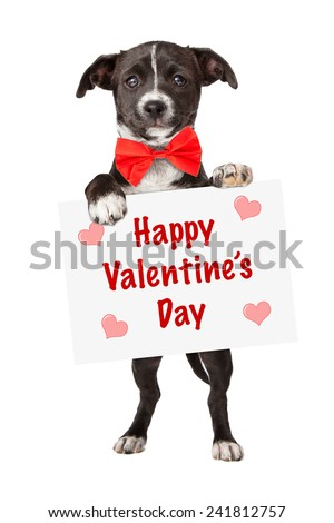 An adorable little black and white mixed breed puppy holding up a sign with the words Happy Valentine's Day - stock photo