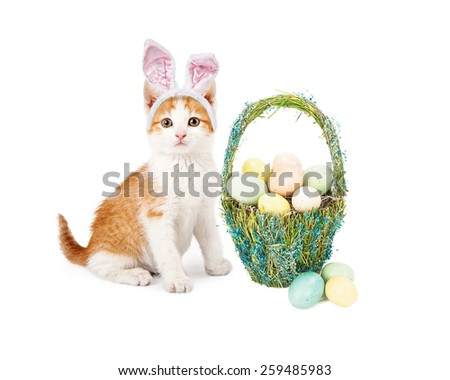 An adorable little kitten wearing Easter Bunny ears sitting next to a pretty straw basket filled with colorful eggs - stock photo