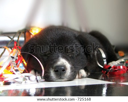 An adorable puppy naps during a holiday photo shoot. - stock photo