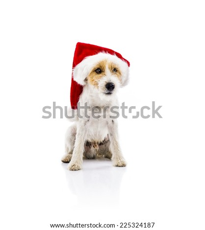 An adorable young parson russell terrier dog in santa hat sitting, isolated on white background - stock photo