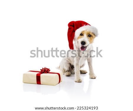 An adorable young parson russell terrier dog in santa hat sitting next to the Christmas gift, isolated on white background - stock photo