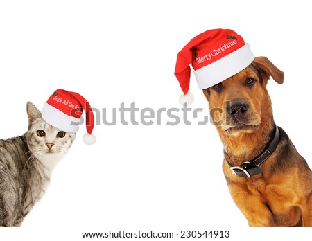An adult large breed dog and a silver cat wearing santa hats coming into the sides of an image with room for text - stock photo