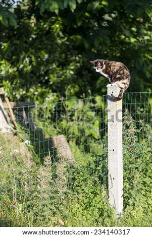 An adult tortoise-shell female cat prowling perched on a concrete post between two gardens. Portrait of domestic cat. Color image - stock photo