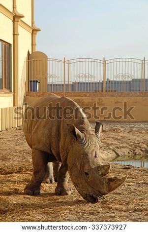 An African rhino (Rhinoceros) in a zoo, vertical image - stock photo