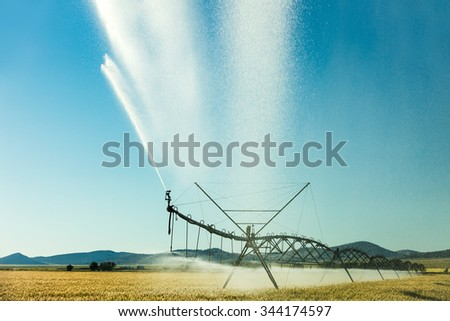 An afternoon view of a center pivot sprinkler system spraying water on a farm field of wheat on a hot summer day. - stock photo