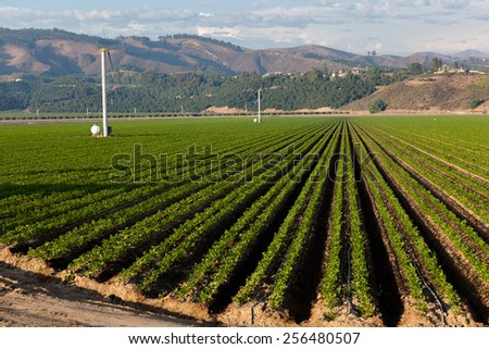 An agricultural field on a sunny day in California - stock photo