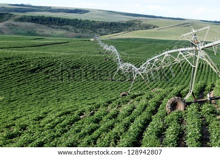 An agricultural sprinkler system in a potato field - stock photo