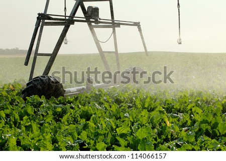 An agricultural sprinkler watering a sugar beet crop - stock photo