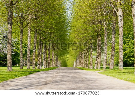 An alley of green trees during spring time. - stock photo