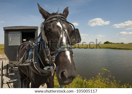 An Amish horse and buggy traveling a gravel road pass by a pond and open field on a sunny day - stock photo