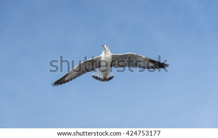 An Ant Eye View Shot of Seagull flying over the seaside district of Bangkok in the afternoon with Clear Blue Sky with Clouds for Nature Backgrounds. - stock photo