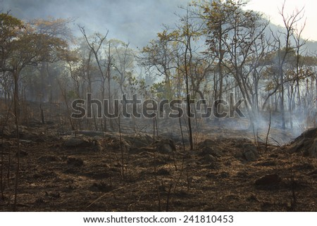 An area of burnt out forrest smoulders after a bushfire - stock photo
