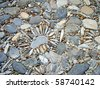 An artistic old mosaic pavement in Rome, Italy - stock photo