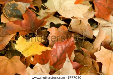 An autumn leaves background image with one yellow leaf surrounded by red, orange and brown leaves - stock photo