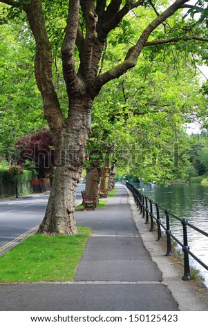 An Avenue of Plane trees alongside the River Thames in Maidenhead, England - stock photo