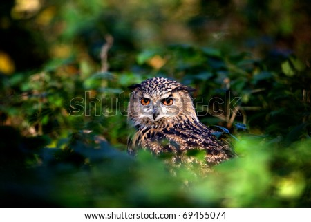 An Eagle Owl in woodland - stock photo