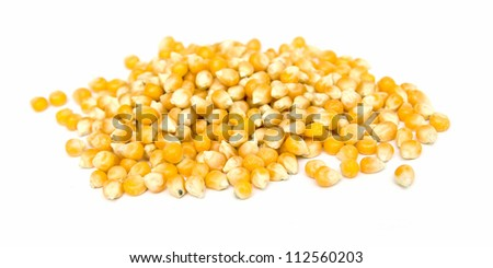 an ear of corn on a white background - stock photo