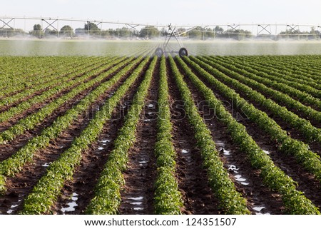 An early morning view of a center pivot sprinkler system in a farm field. - stock photo