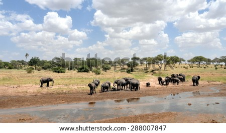 An elephant herd - stock photo
