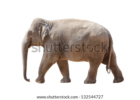 An elephants family play together - stock photo